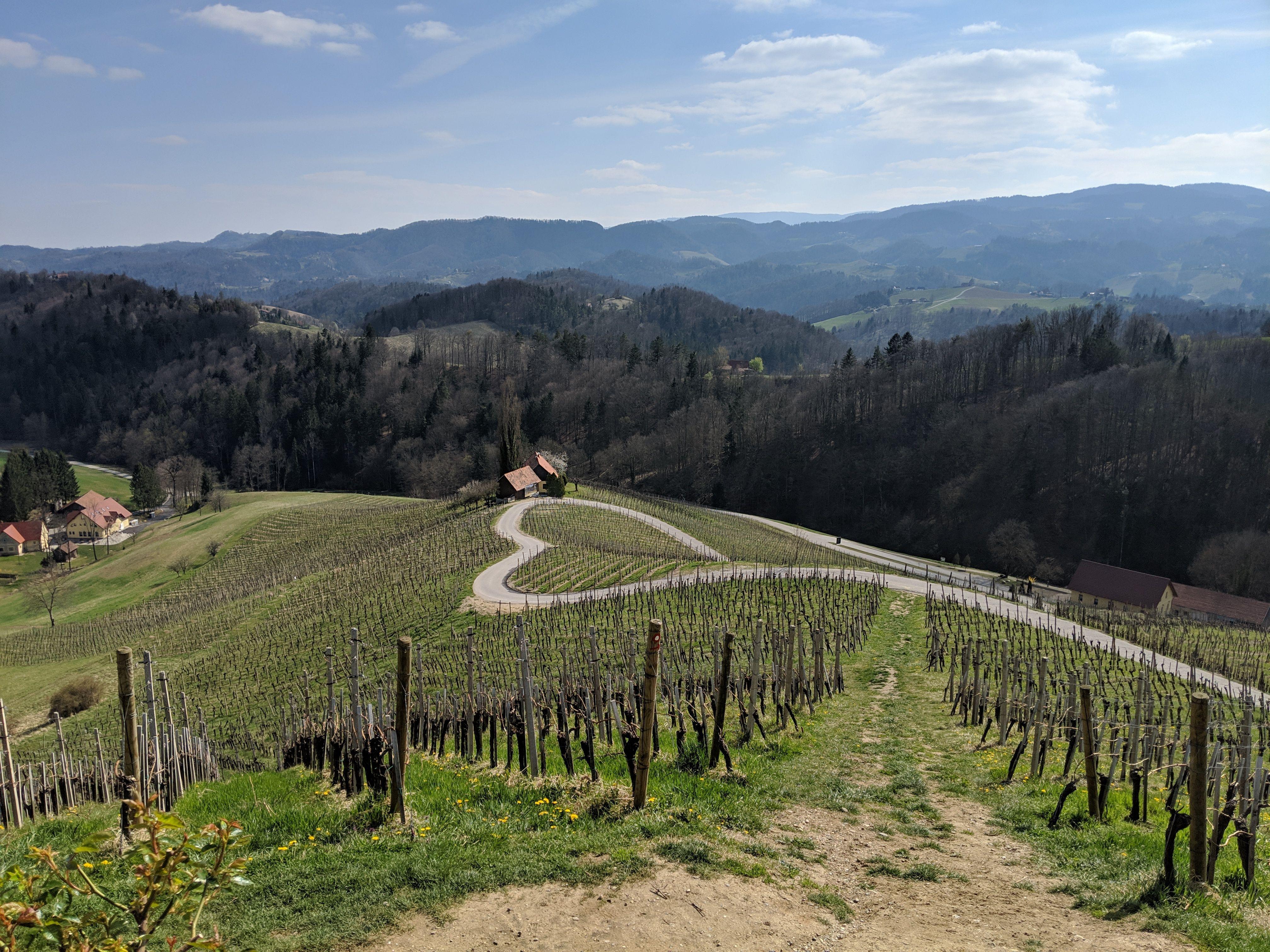 Nova predsednica Štajerske turistične zveze je Janja Viher